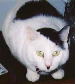 Kitler Hitler Cat