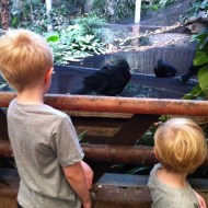 Top tips for enjoying a trip to the zoo