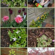 Spring is … well … springing in my garden