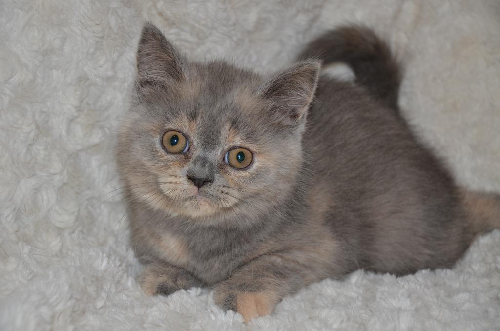 Nieuwe foto's kittens Nelleke