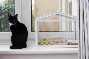 kleines IKEA Gewächshaus auf der Fensterbank..