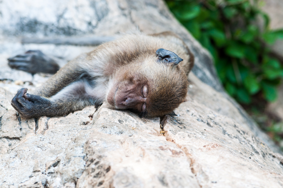 Affen Berg Thailand