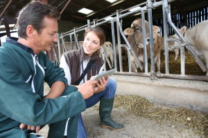 Veterinarian with breeder checking on herd