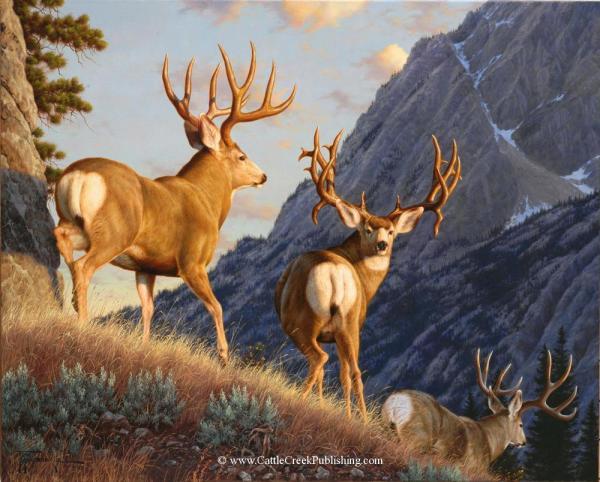Mule Deer Art Drawing Painting