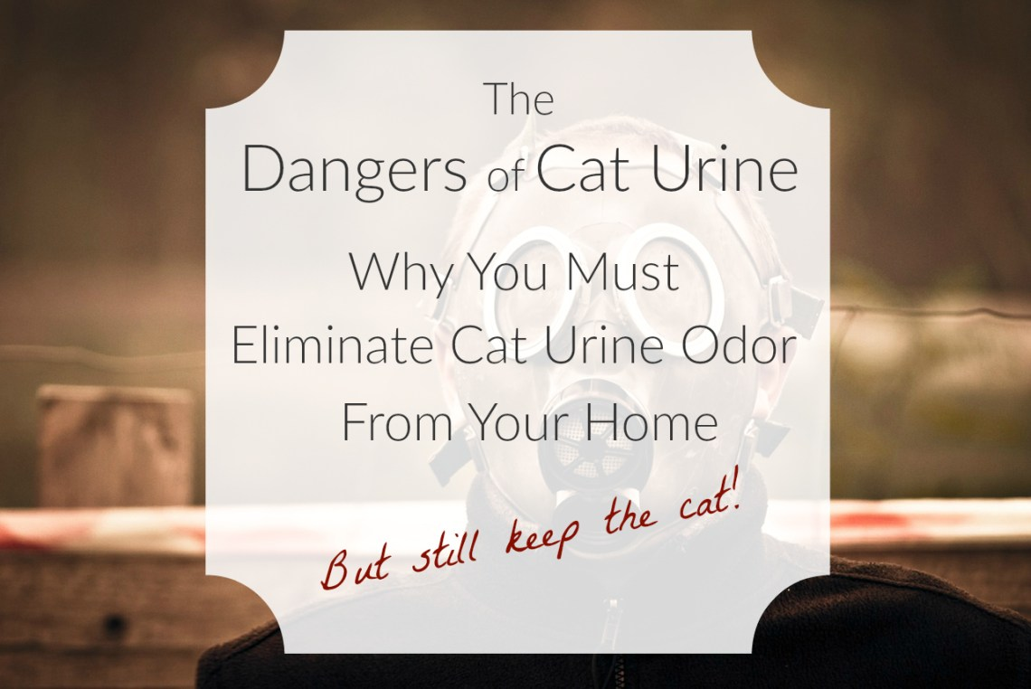 Image Result For How To Get Rid Of Cat Smell In Carpet