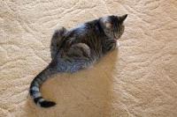 cat urine smell | Cat Urine Problems Eliminated