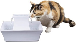 PetSafe Cat And Dog Water Fountain