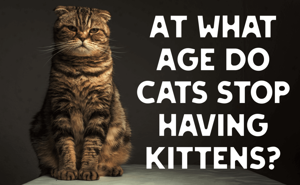 At What Age Do Cats Stop Having Kittens?