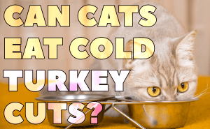 Can Cats Eat Cold Turkey Cuts?