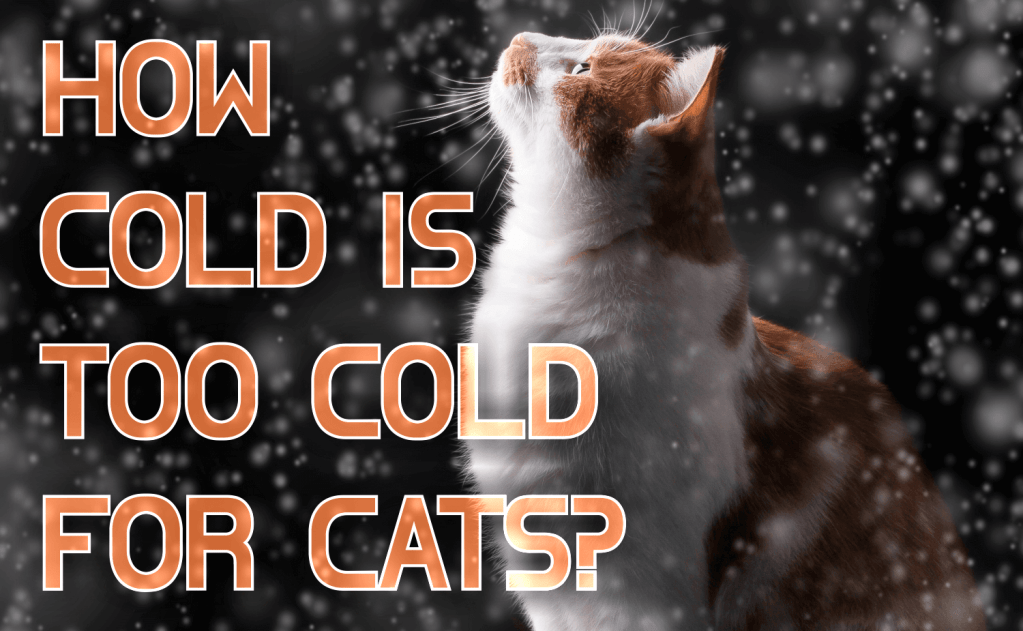 How Cold is Too Cold for Cats?