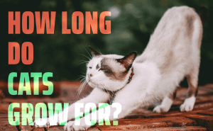 How Long Do Cats Grow For?
