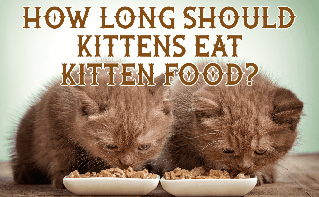 How Long Should Kittens Eat Kitten Food?
