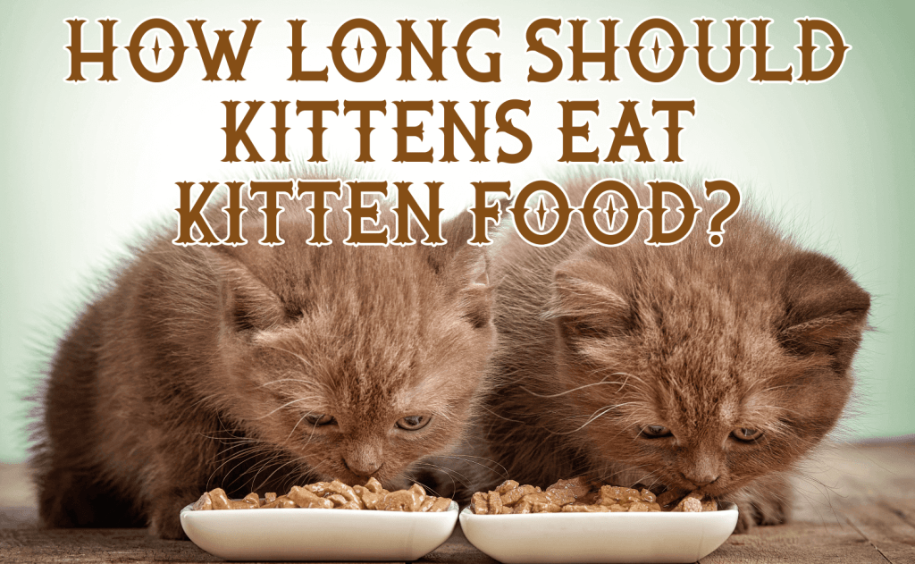 How Long Should Kittens Eat Kitten Food?