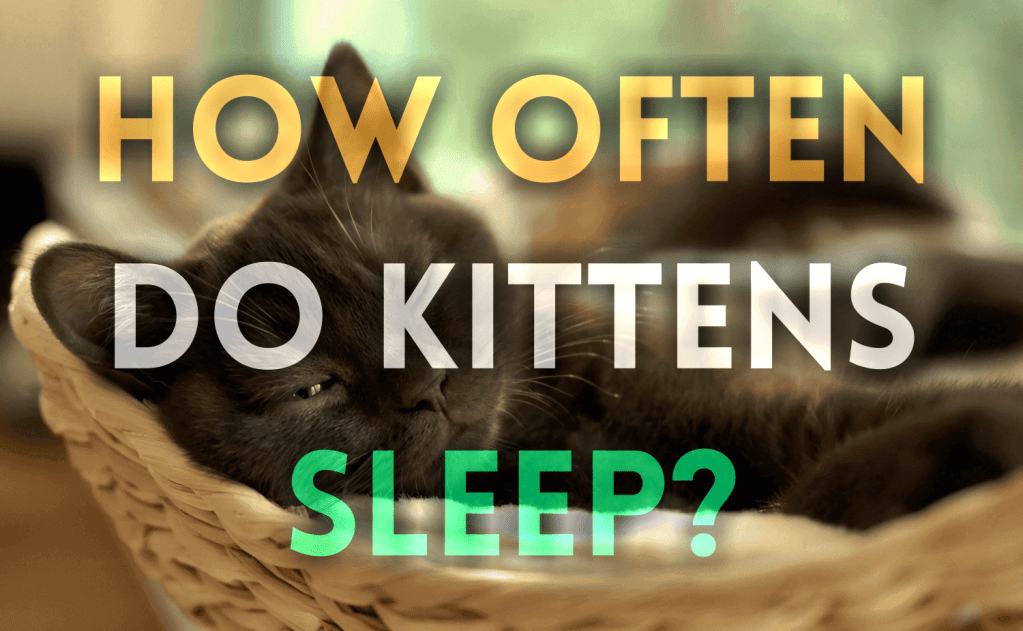 How Often Do Kittens Sleep?