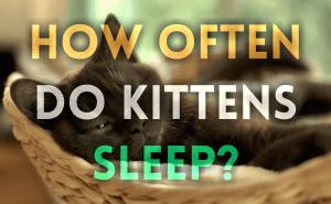 How Often Do Kittens Sleep?