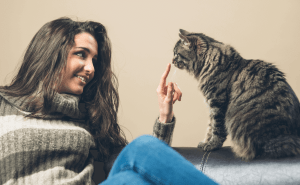 What Do Cats See When They Look At Humans?