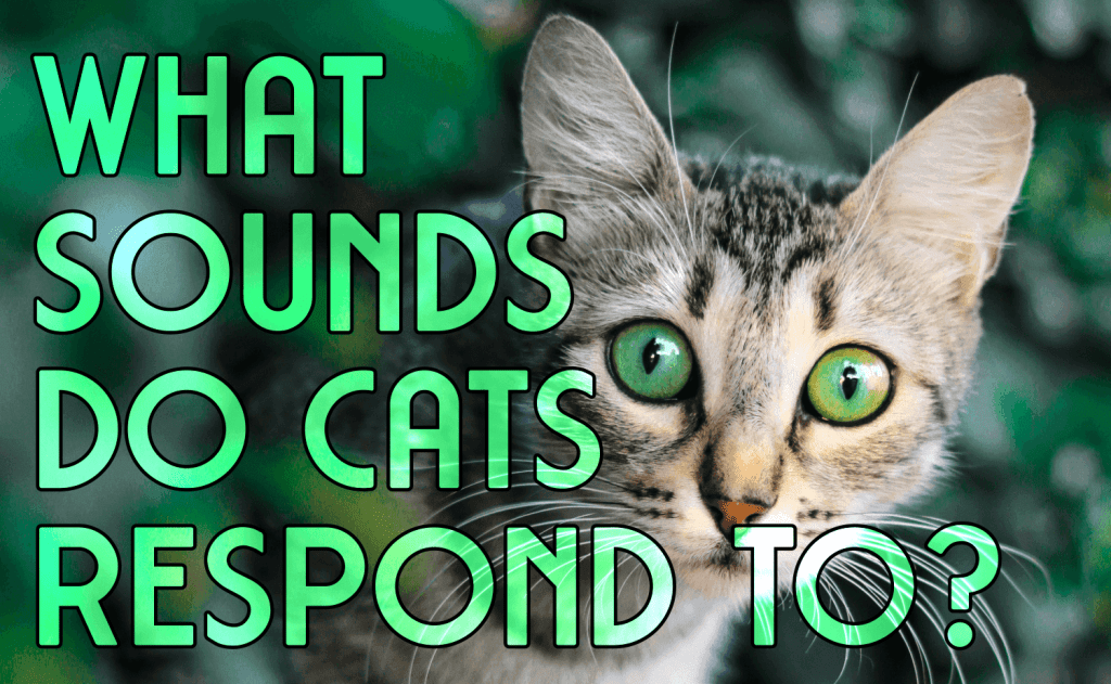 What Sounds Do Cats Respond To?