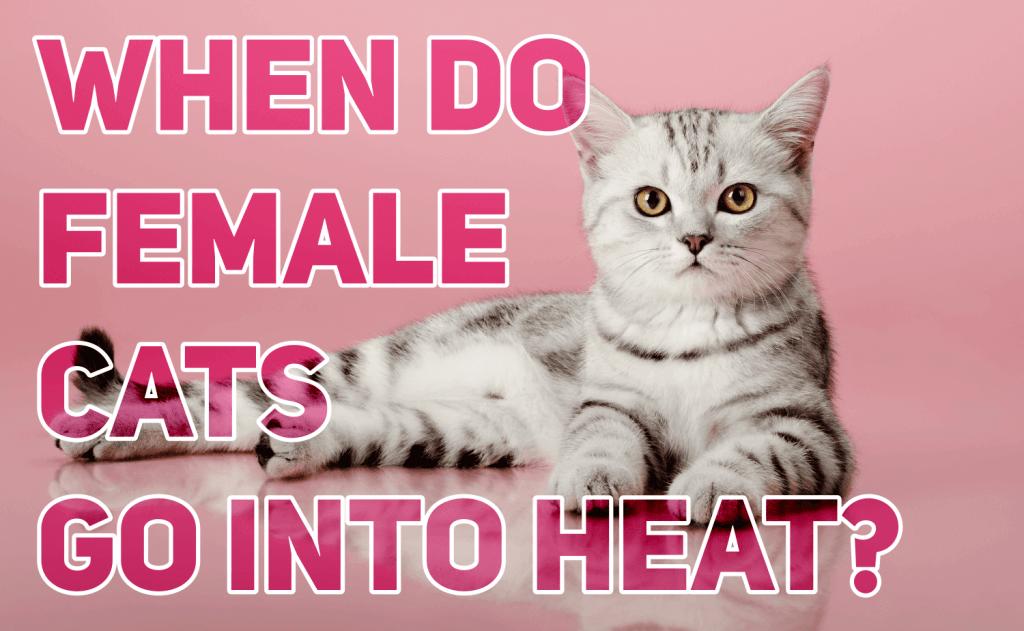 When Do Female Cats Go Into Heat?
