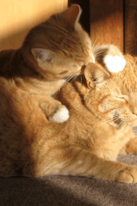 How to Tell if Two Cats Are Bonded With Each Other?