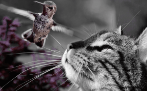 Why Do Cats Chatter at Birds?