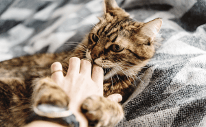 Why Do Cats Like to Be Pet?