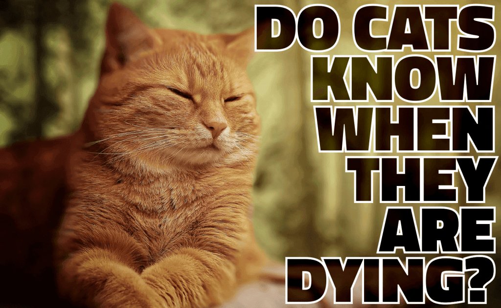 Do Cats Know When They Are Dying?