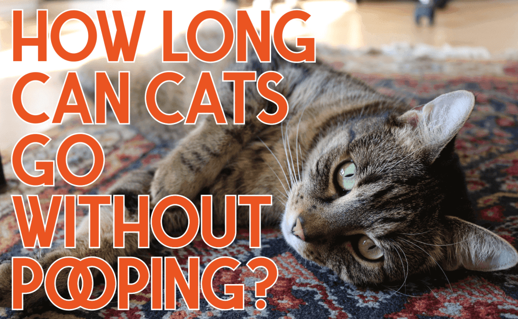 How Long Can Cats Go Without Pooping?