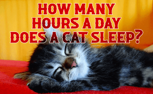 How Many Hours a Day Does a Cat Sleep?