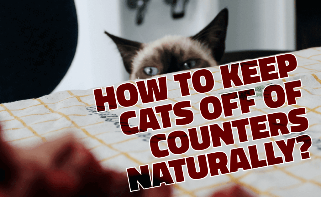 How To Keep Cats Off of Counters Naturally?