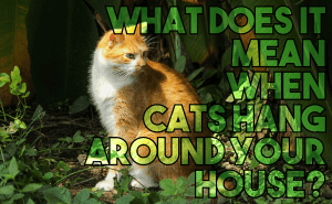 What Does It Mean When Cats Hang Around Your House?