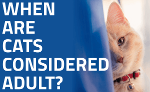 When Are Cats Considered Adult?