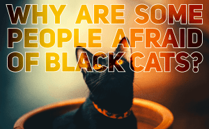 Why Are Some People Afraid Of Black Cats?