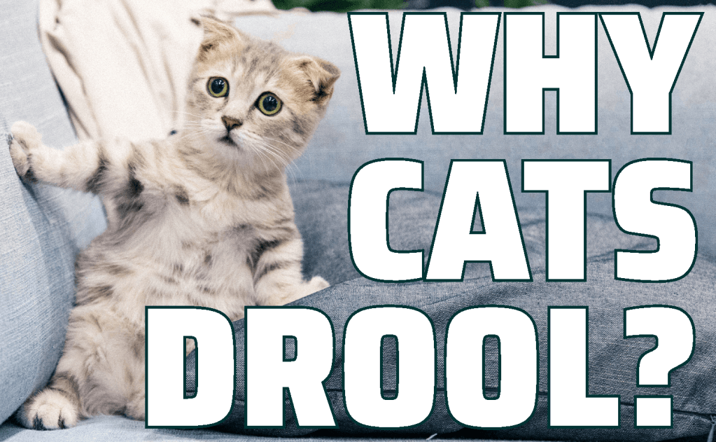 Why Cats Drool?