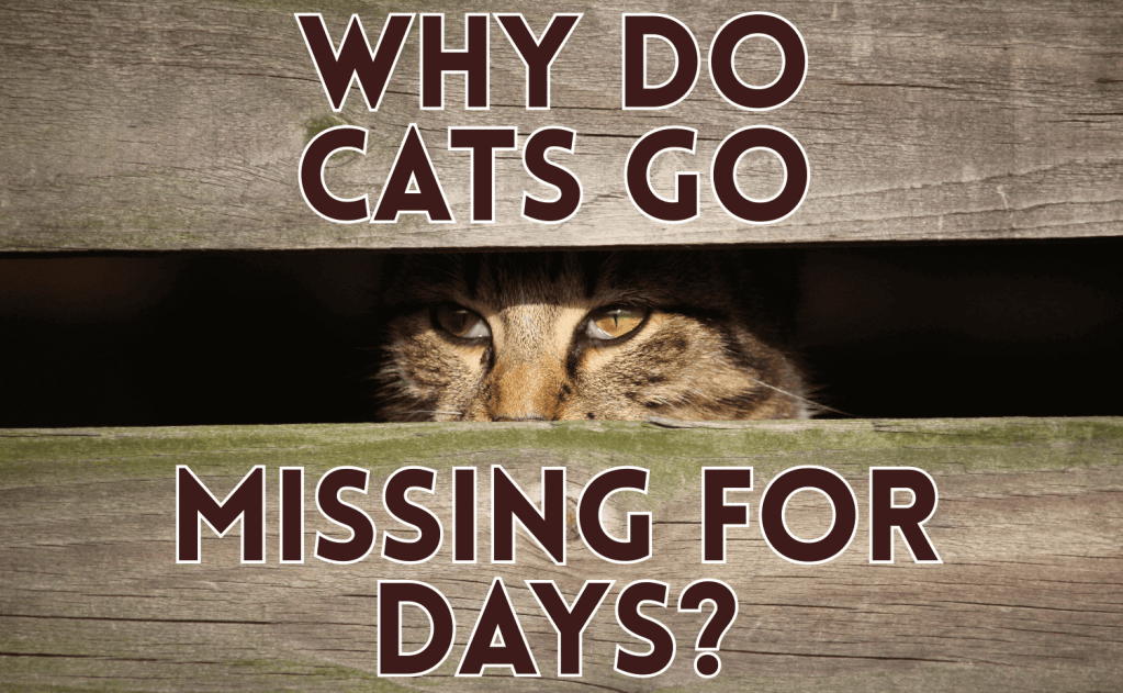 Why Do Cats Go Missing For Days?