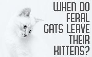 When Do Feral Cats Leave Their Kittens?