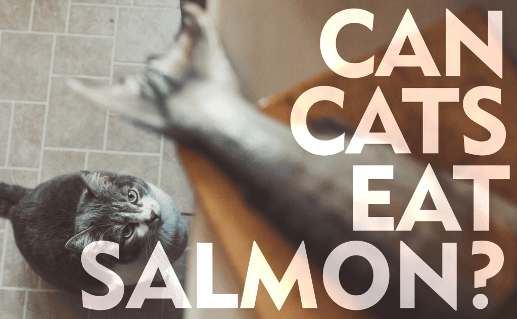 Can Cats Eat Salmon?