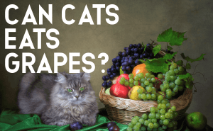 Can Cats Eats Grapes?