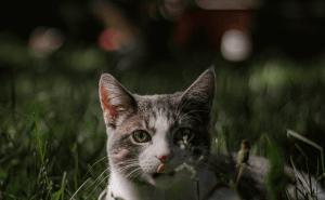 Can Cats Eat Squirrels?
