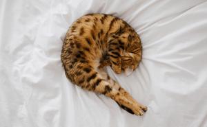 How Many Bones Do Cats Have?