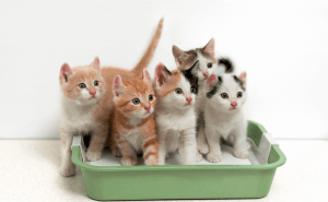 Why Do Cats Lay in Their Litter Box?