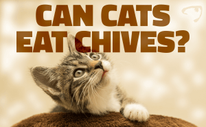 Can Cats Eat Chives?