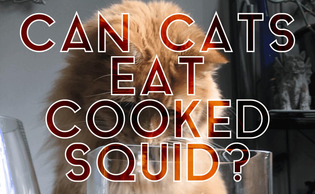 Can Cats Eat Cooked Squid?
