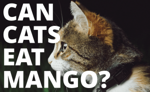 Can Cats Eat Mango?