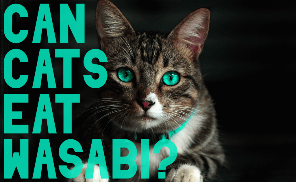 Can Cats Eat Wasabi?