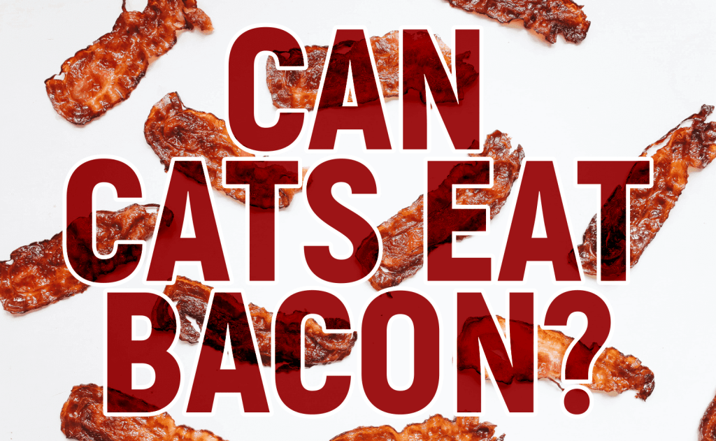 Can Cats Eat Bacon?