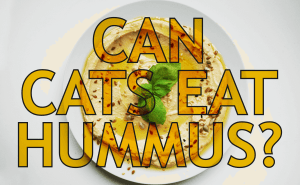 Can Cats Eat Hummus?