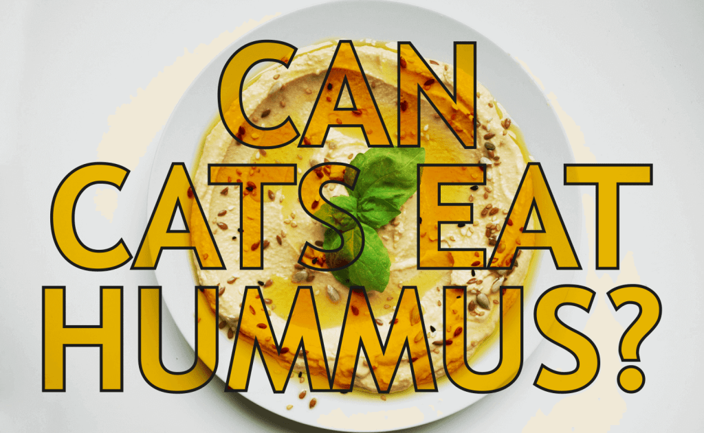 Can Cats Eat Hummus?