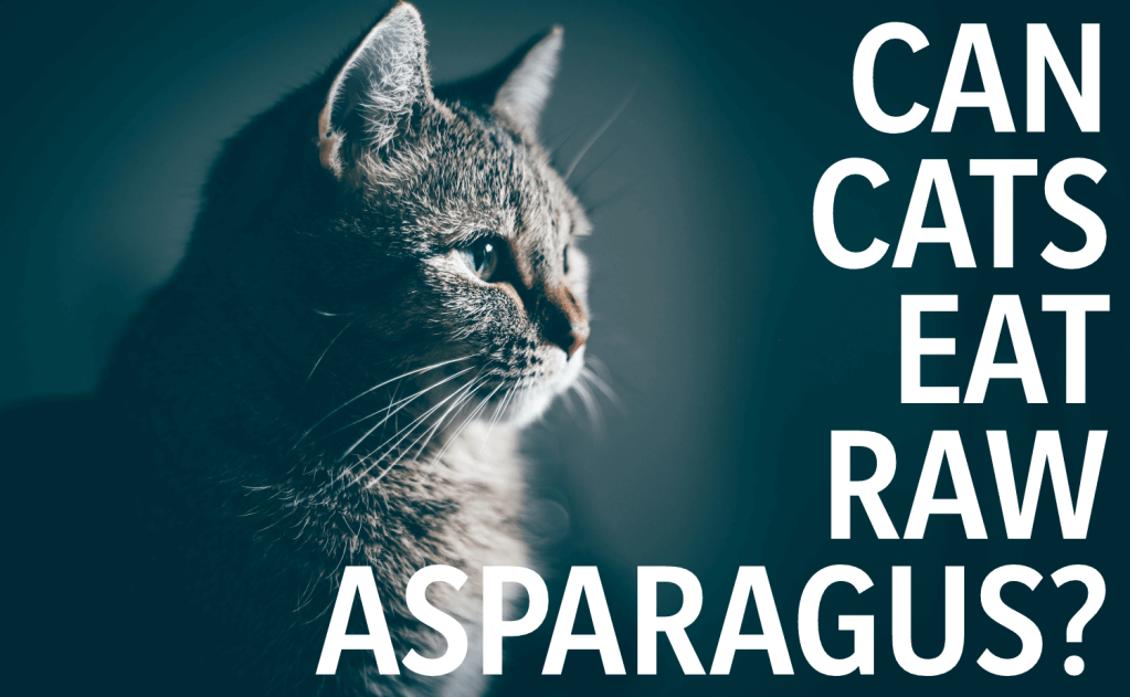 Can Cats Eat Raw Asparagus?