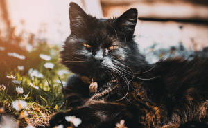 How Fast Do Cats Breathe?