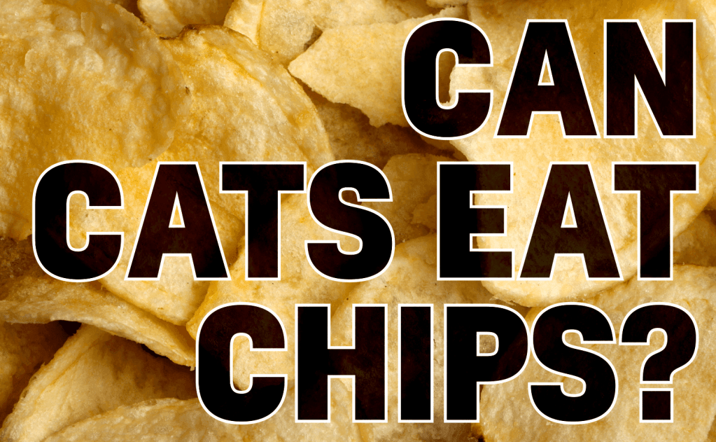 Can Cats Eat Chips?